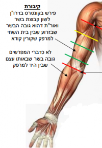 Tefillin shel yad placement.png